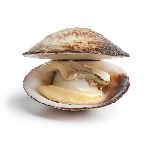 Clams Nutrition Facts: Build Muscle and Look Younger.