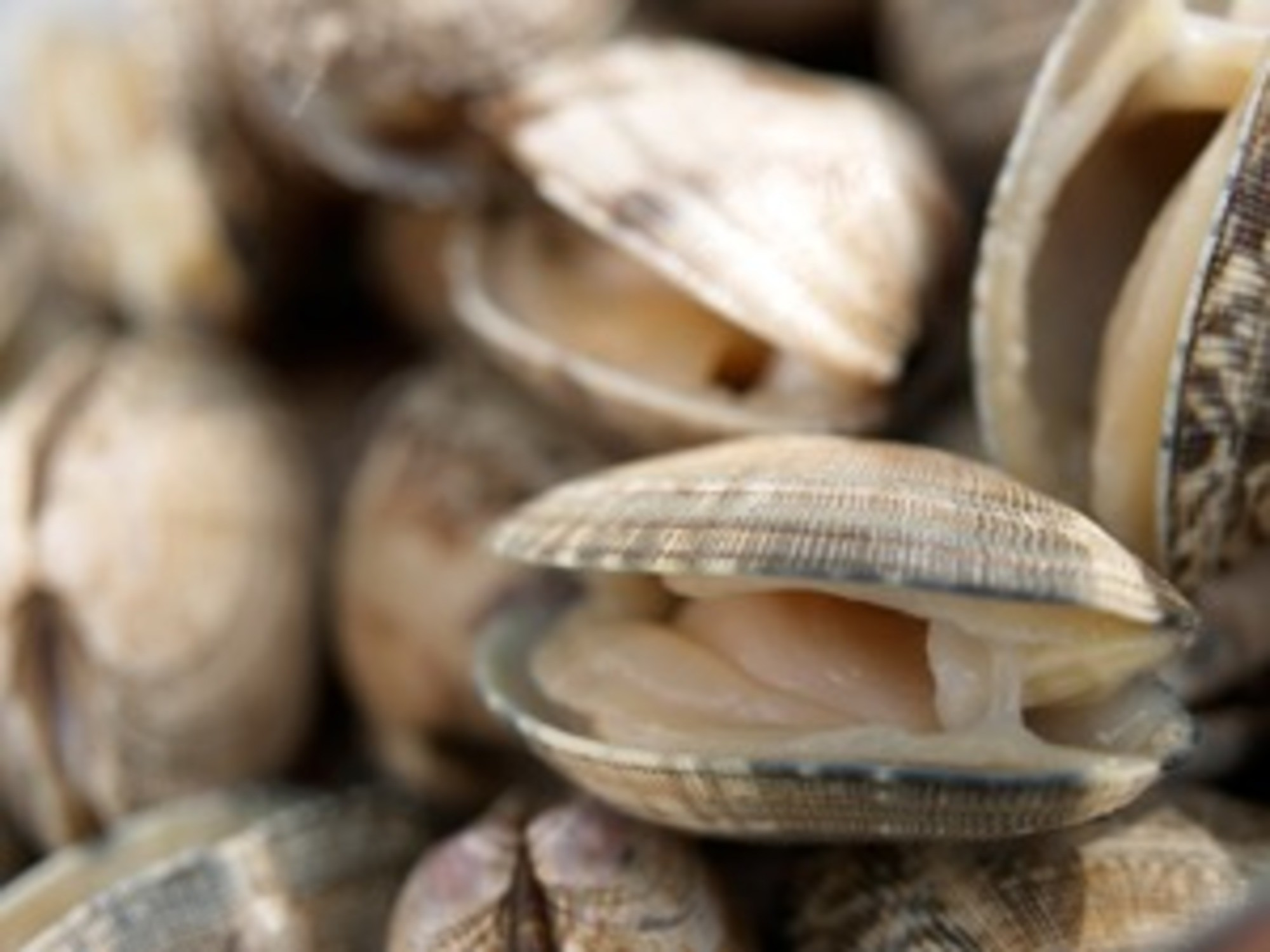 Clams: an overview.