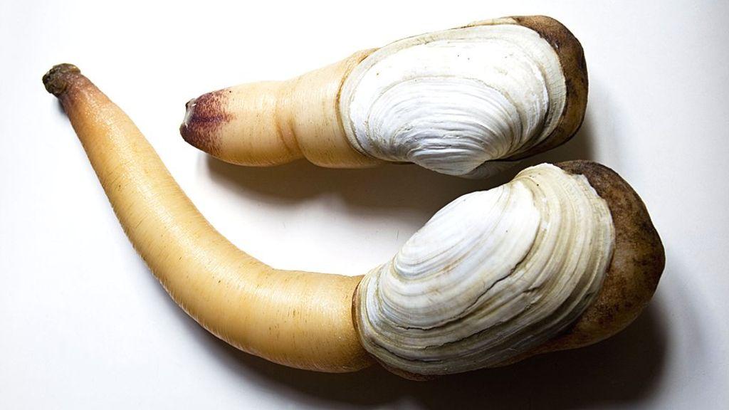 The 'phallic' clam America sells to China.