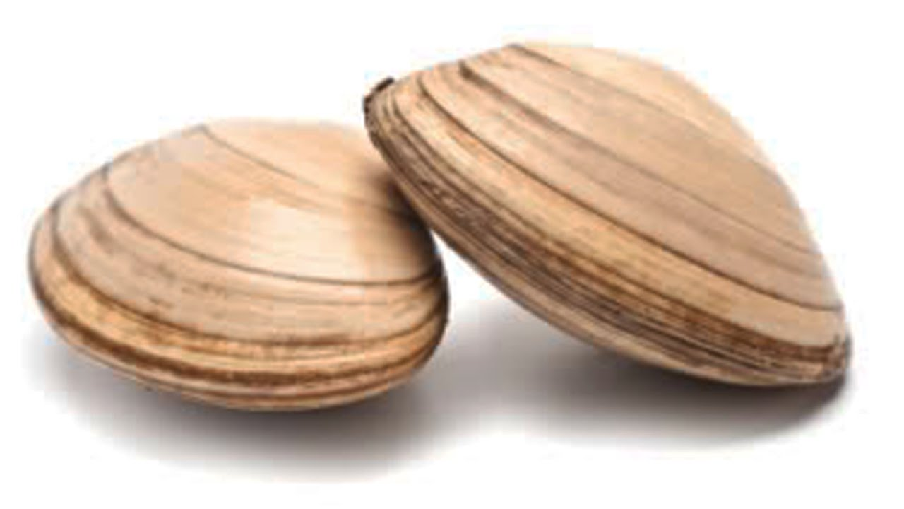 How Do Clams Have Sex?.