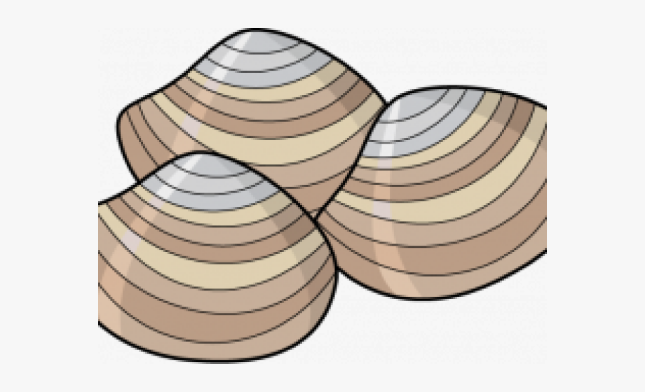 Clams Clipart Bivalve.