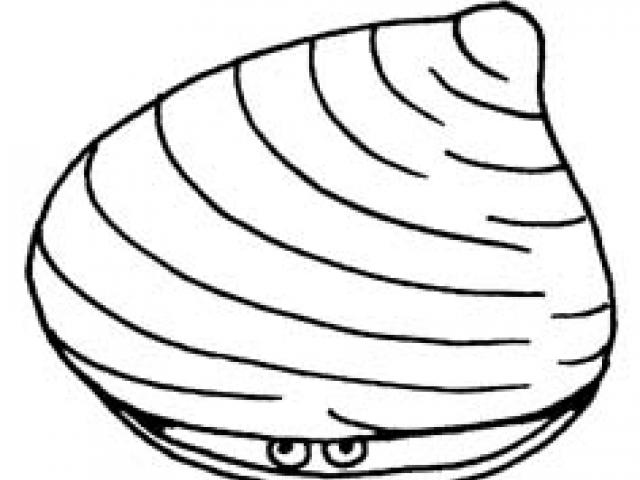 Free Clams Clipart, Download Free Clip Art on Owips.com.