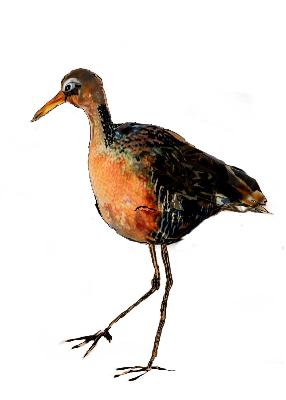 bird illustration art print / brown gold peach by MelGrossArt.
