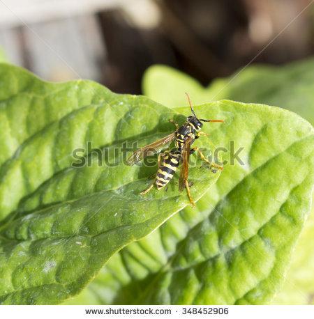 Insecta Stock Photos, Royalty.