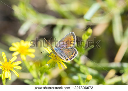 Class: Insecta Stock Photos, Images, & Pictures.