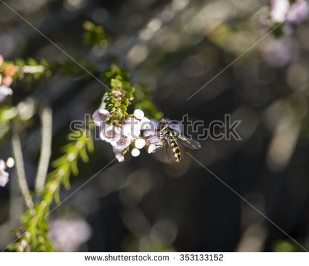 Insecta Stock Photos, Royalty.