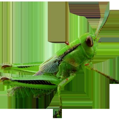 Arthropoda Part II Flashcards by ProProfs.