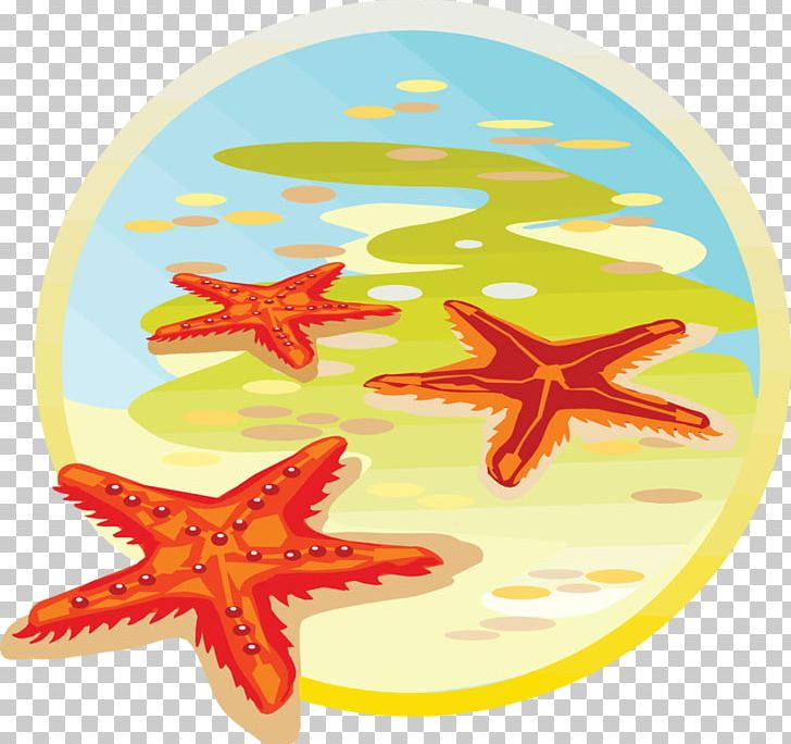 Starfish Sea Classe De Mer PNG, Clipart, Animals, Beautiful.