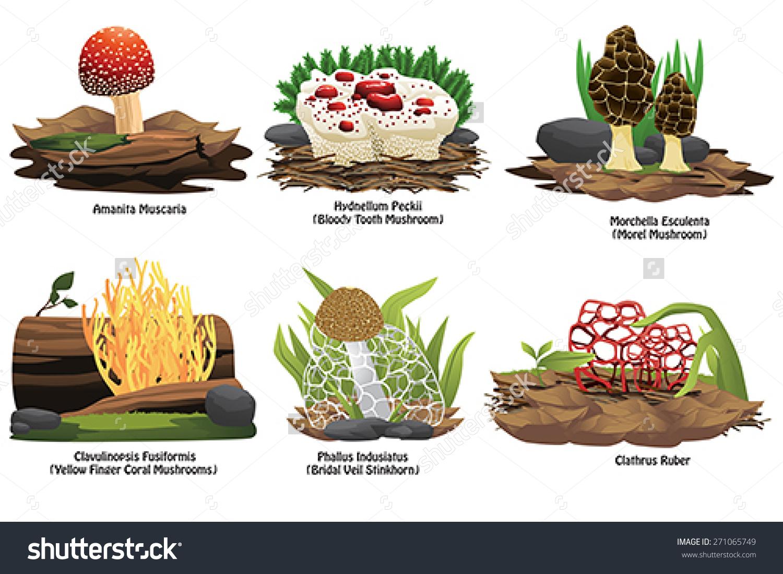 Vector Illustration Different Types Mushroom Stock Vector.