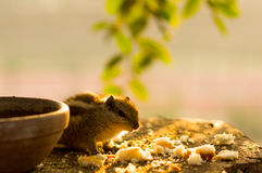 Bird Eating Crumbs Stock Photos, Images, & Pictures.