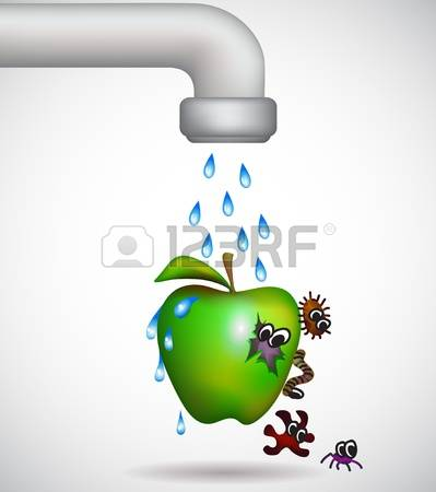 Washing Fruit Stock Vector Illustration And Royalty Free Washing.