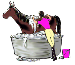 Annabell's Horse Rug Washing & Repair Service.