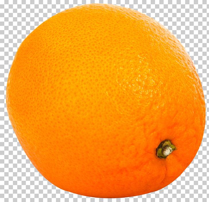 Clementine Grapefruit Tangelo Tangerine Rangpur, Orange.