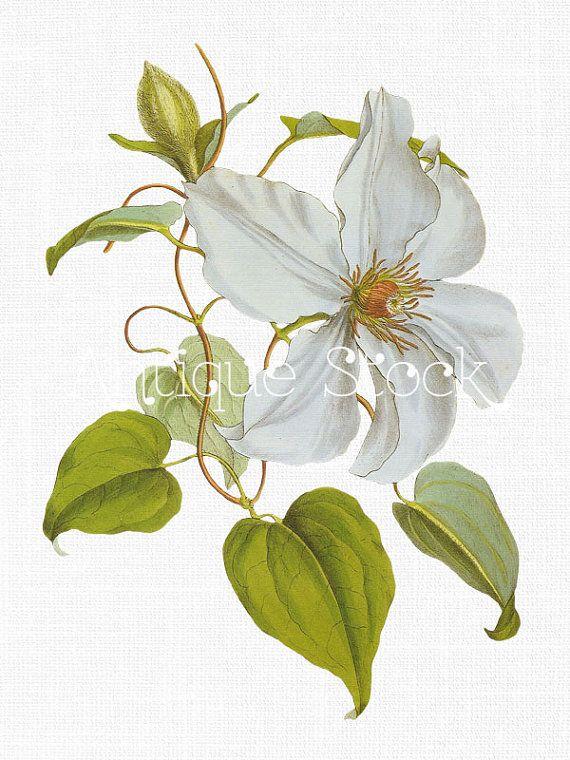 Flower Clip Art \