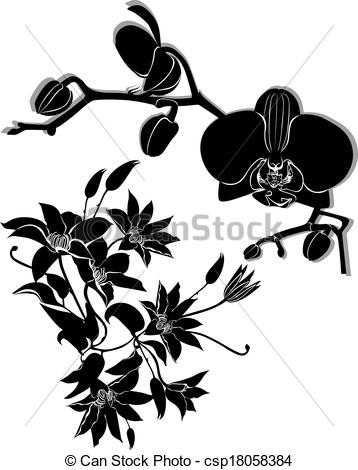 Clematis Illustrations and Clipart. 140 Clematis royalty free.