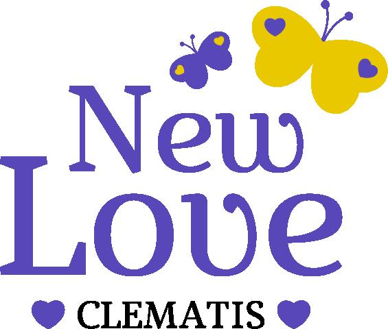 Clematis 'New Love'.