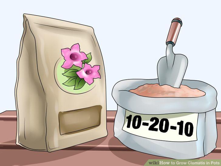3 Ways to Grow Clematis in Pots.