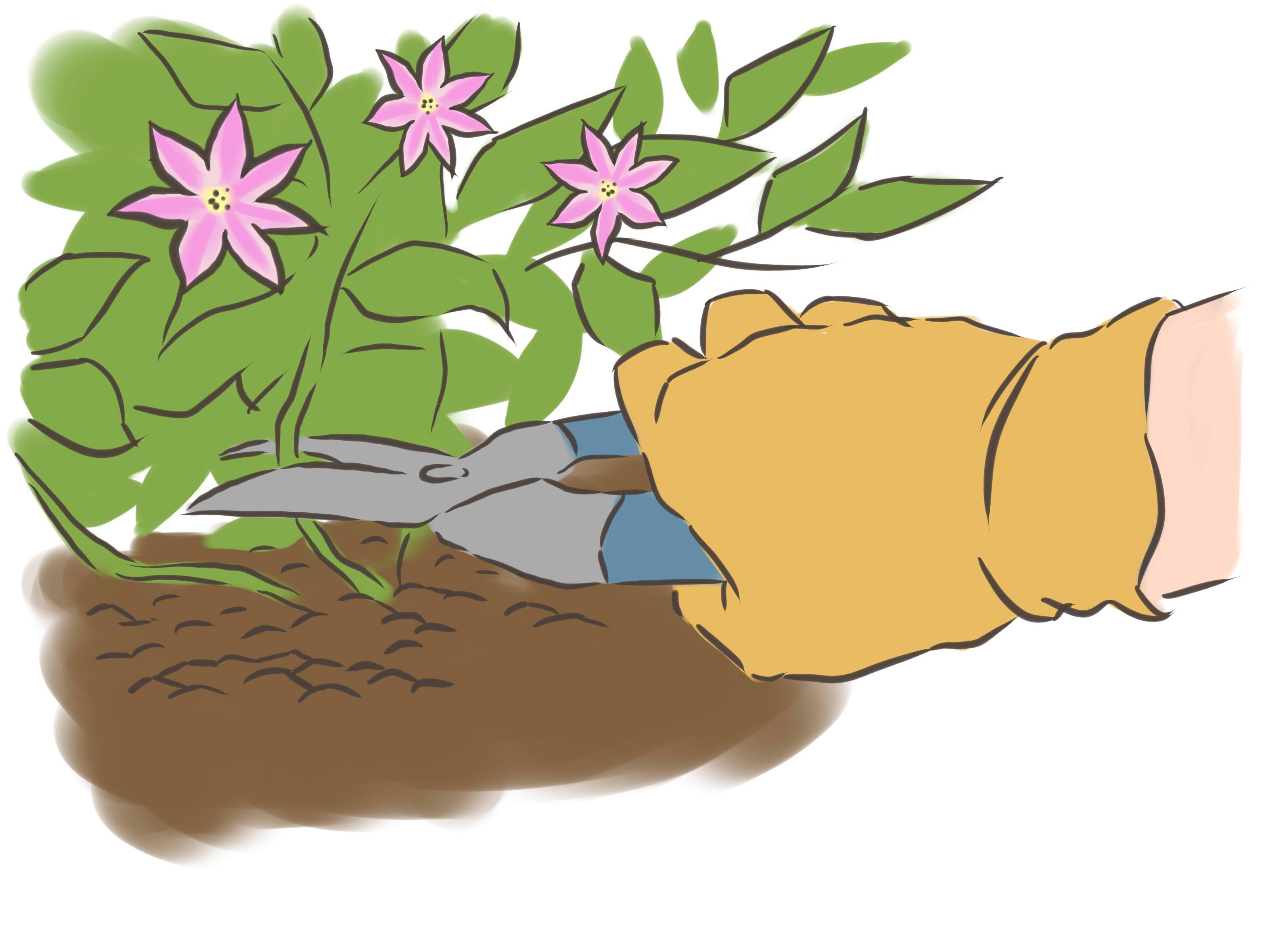 3 Ways to Prune Clematis.