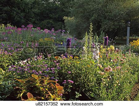 Stock Photo of GARDENS: Tall perennials, Hollyhock, delphinium.