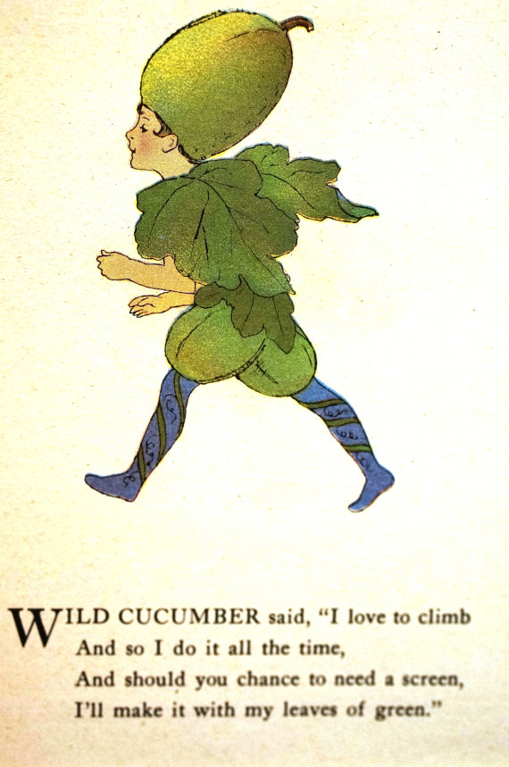 Climbing cucumber clipart #4