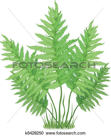 Clipart of fern, isolated on the white background k15309581.