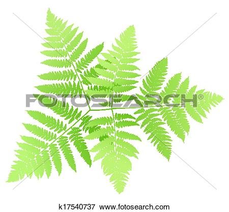 Clip Art of fern k17540737.
