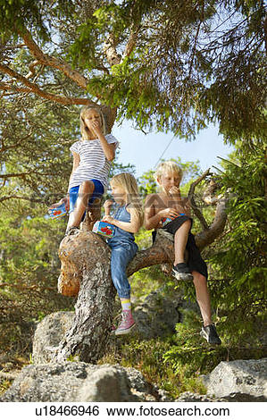 Stock Images of Children climbing tree in forest u18466946.