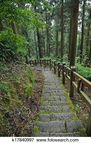 Picture of old stair climbing steps in forest k17840997.