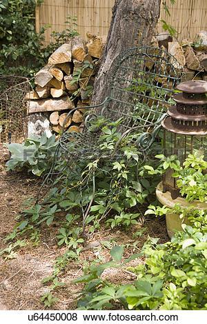 Pictures of GARDEN: Vintage garden chair, climbing vines u64450008.