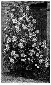 1000+ ideas about Garden Clipart on Pinterest.