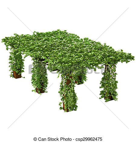 Stock Illustrations of Long and tall pergola with climbing ivy.