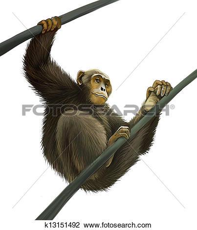 Clip Art of Chimpanzee climbing on liana k13151492.