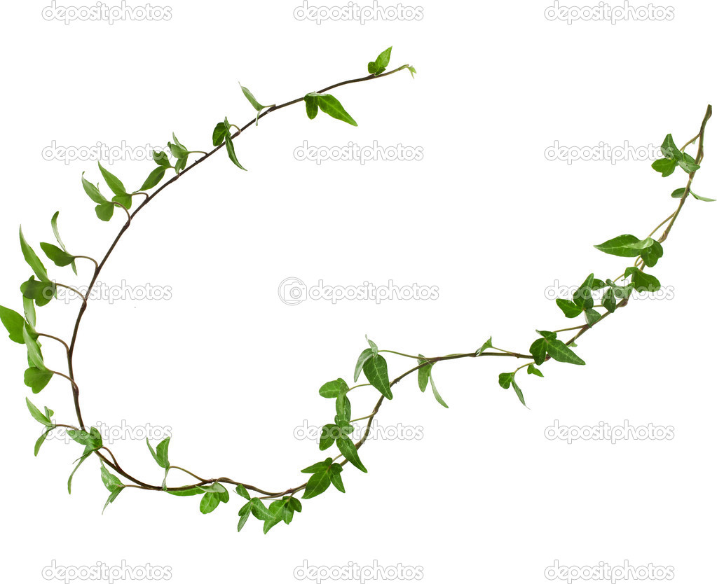 Border Frame made of Green climbing plant, isolated on white.