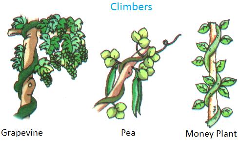 Plants Around Us.