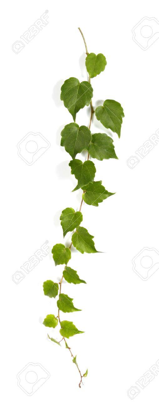 Garden Design: Garden Design with Clipart Trees, Plants, Vines.