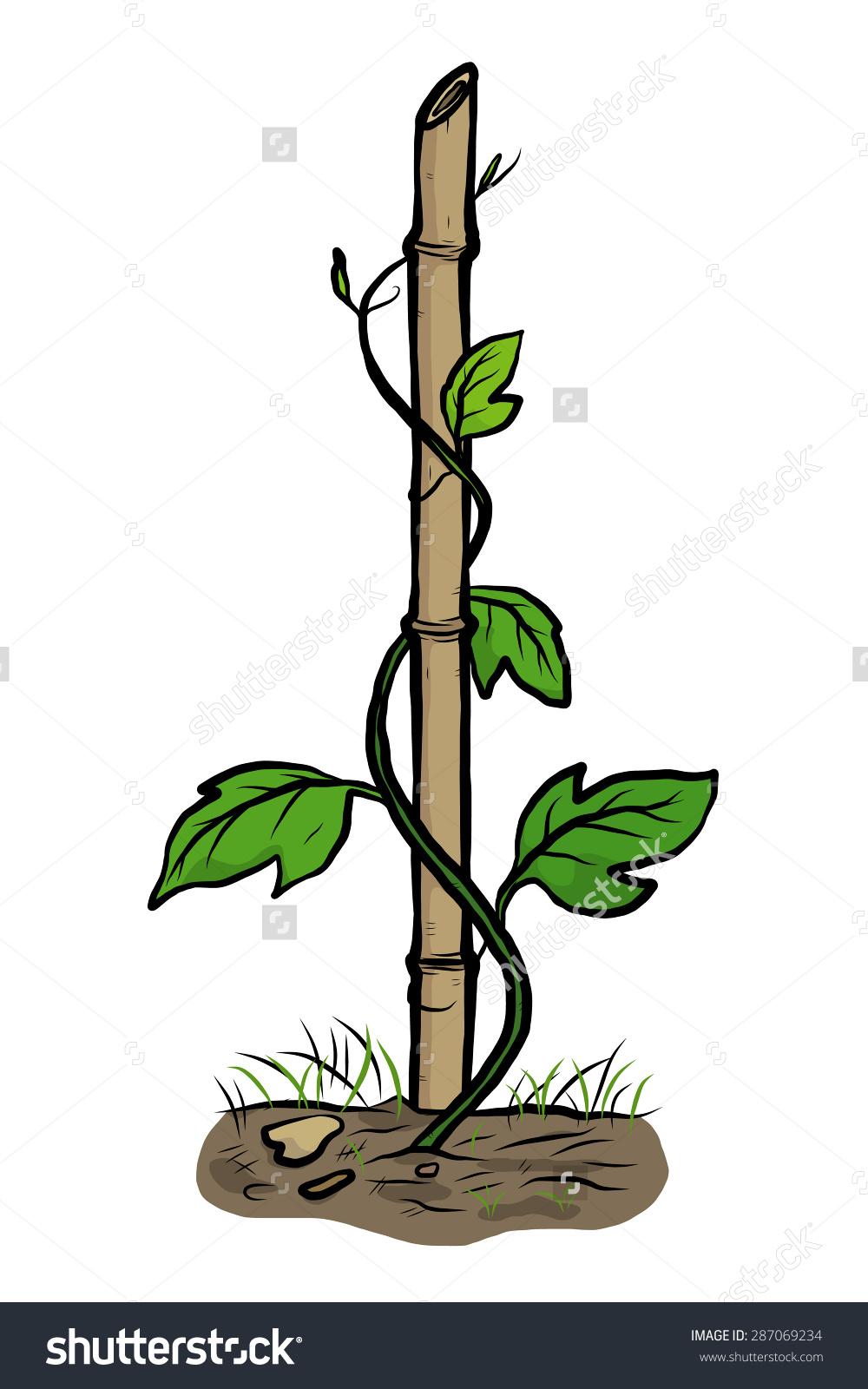 Climber Plants Creeping Bamboo Cartoon Vector Stock Vector.