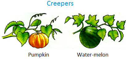 Climbing plants clipart - Clipground