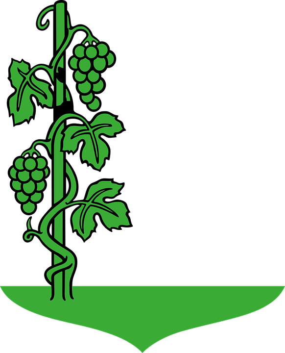 Free vector graphic: Grapes, Green, Plants, Vines.