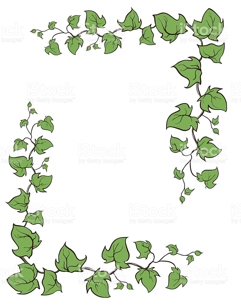 Ivy Vector Hand Drawn Frame Climbing And Groundcreeping Woody.
