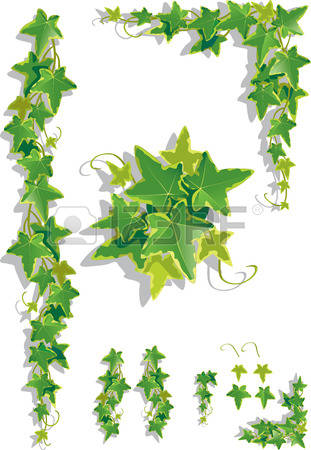 1,117 Ivy Vine Cliparts, Stock Vector And Royalty Free Ivy Vine.