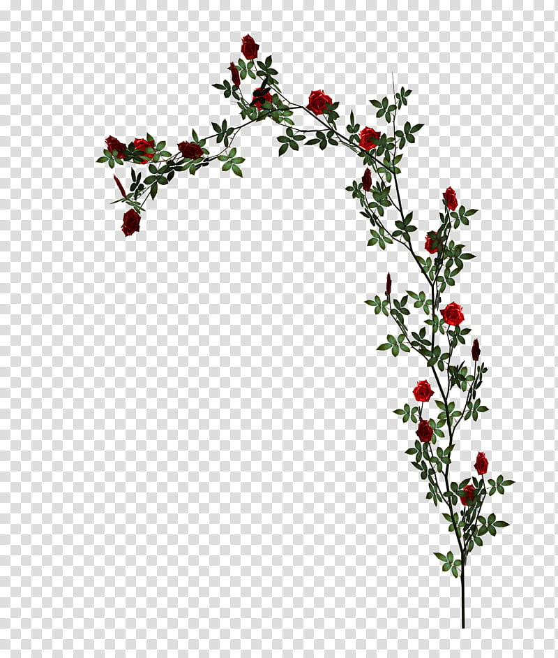 D Climbing Roses, red petaled flowers transparent background.