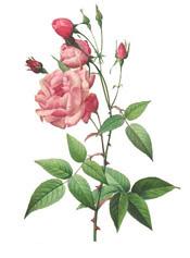 Northwest Rose Historians.