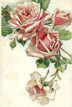 Vining roses background clipart.