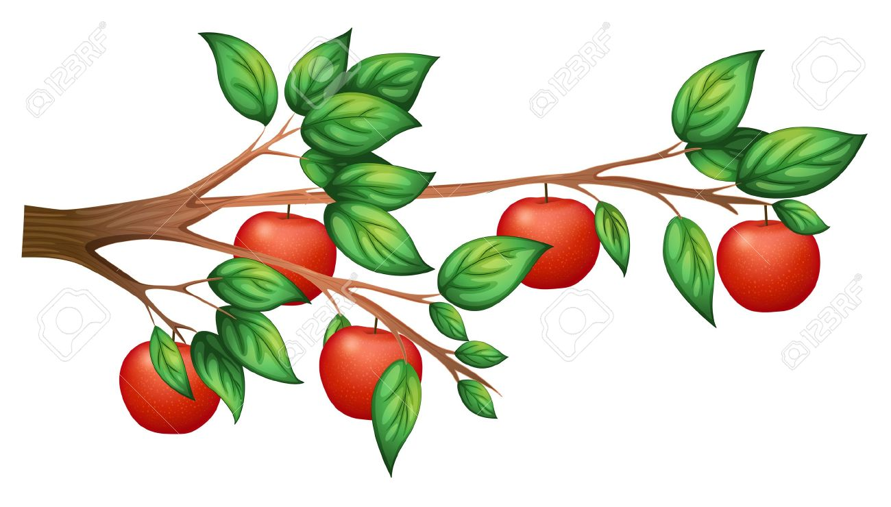 Illustration of an apple tree on a white background.