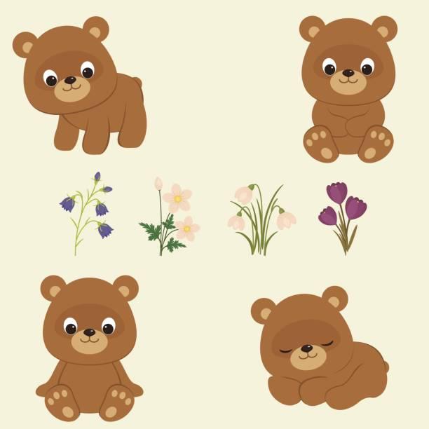 Best Bear Cub Illustrations, Royalty.