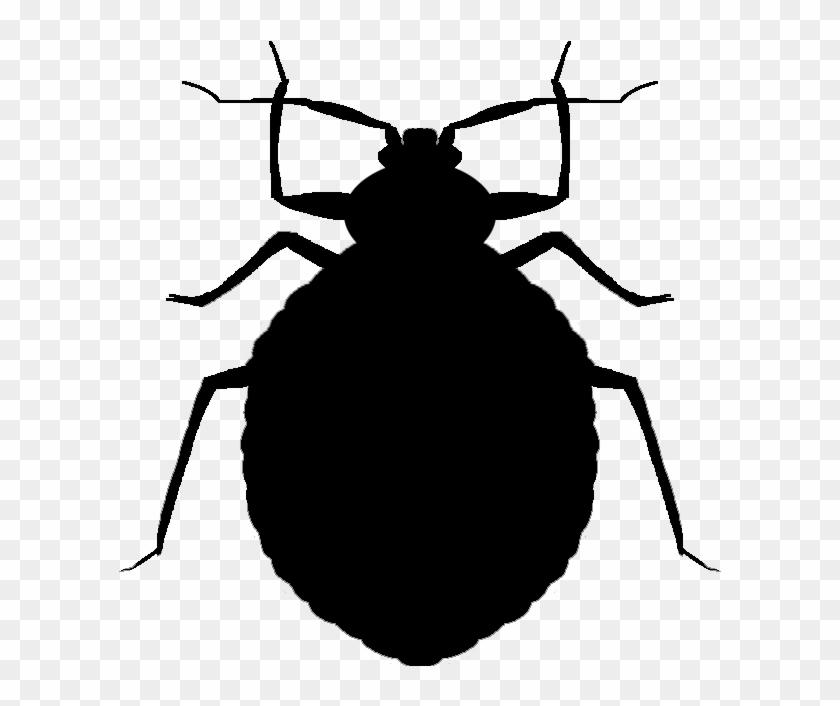 Vector Bug Cricket.