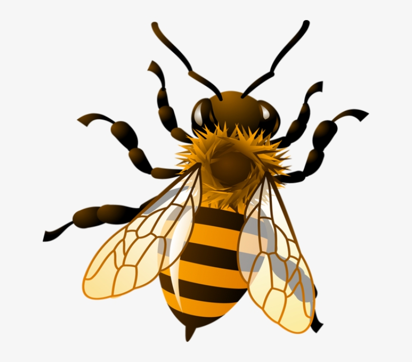 Bee Png Clipart.