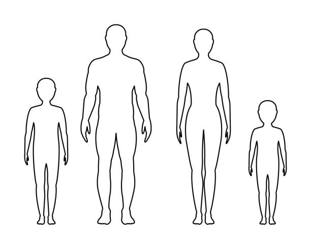 Best The Human Body Illustrations, Royalty.