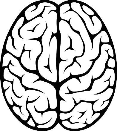 Brain Top View premium clipart.