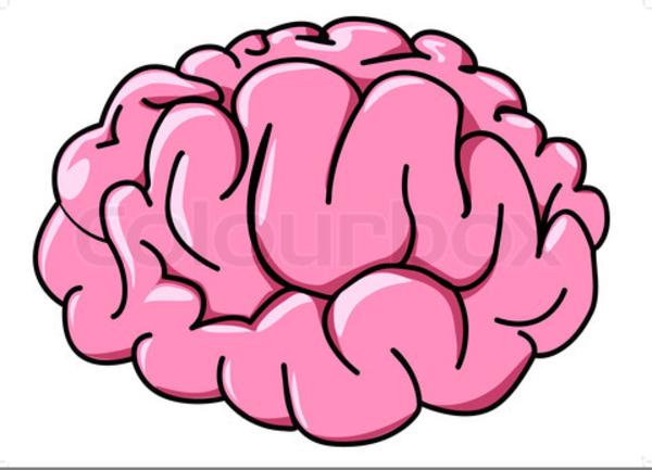 Free Clipart Brains.